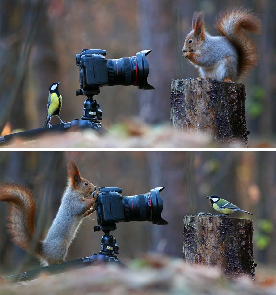 La foto animale