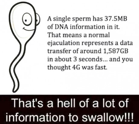Sperm transfer rate
