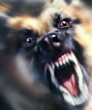 Cane incazzato