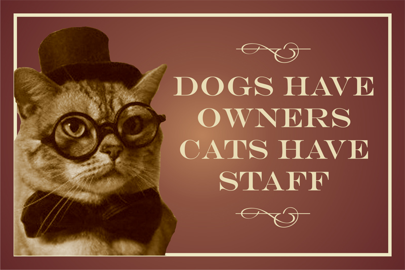 Dog have owners cats have staff