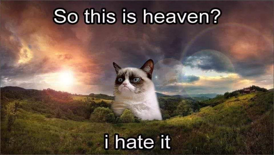 Grumpy Cat in Heaven