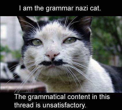 Grammar Nazi cat