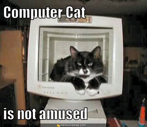 Computer cat is not amused